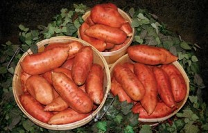 Sweet Potatoes - Berlo