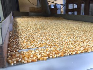 Popping corn processing