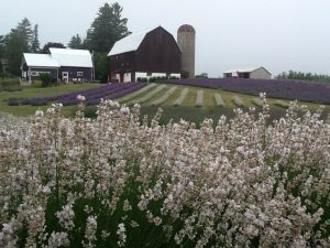 Apple Hill Lavender