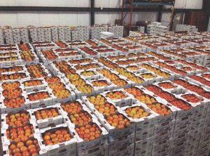 Tomatoes at Shabatura Produce