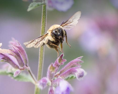 Bee on flower CWF