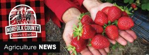 Agriculture News Strawberries