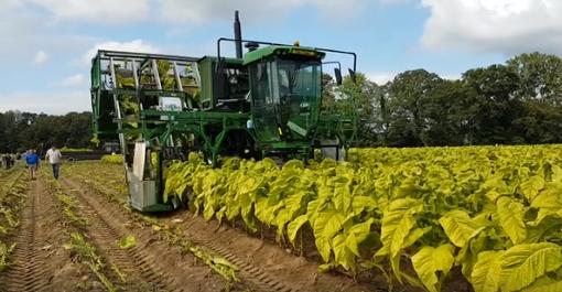 tobacco harvester Norfolk County